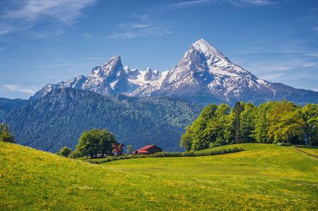 Idyllisch landschap in de Alpen met verse groene weiden, bloeiende bloemen, typische boerderijen en snowcapped bergtoppen op de achtergrond, Nationaal Park Berchtesgadener Land, Beieren, Duitsland