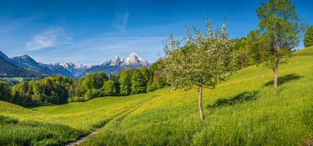 Vue panoramique du paysage de montagne idyllique dans les Alpes avec sentier de randonnée sur les pâturages de montagne vert frais, des fleurs et des arbres fruitiers en fleurs au printemps
