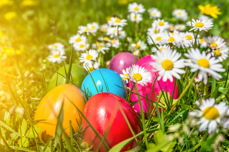 Beautiful view of colorful Easter eggs lying in the grass between daisies and dandelions in the sunshine