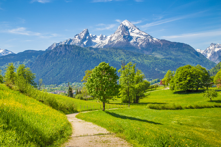 Idyllic landscape with hiking trail in the Alps with fresh green mountain pastures and snow-capped mountain tops in the background in summer