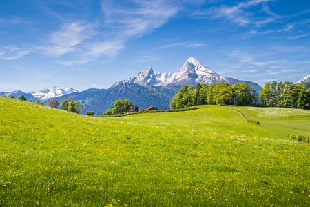 新鮮な緑の牧草地と花が咲く夏にバック グラウンドで雪に覆われた山の頂上とアルプスの牧歌的な風景