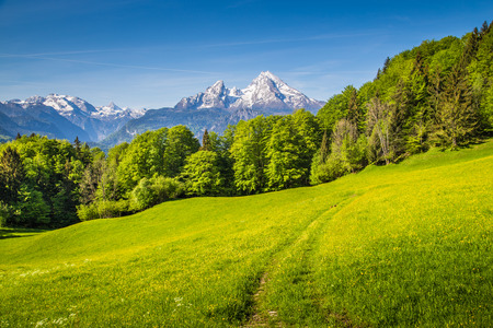 Idyllic landscape in the Alps with fresh green meadows and blooming flowers and snow-capped mountain tops in the background Stock Photo