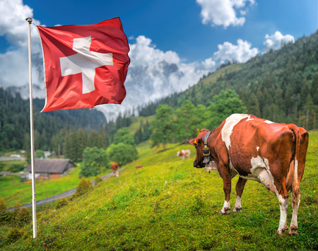 Idyllic summer landscape in the Alps with cows grazing in fresh green meadows between typical farmhouses and snow-capped mountain tops Swiss flag waving against blue sky on a sunny day, Switzerland