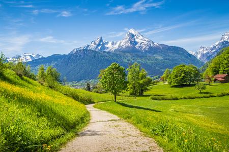 ハイキング新鮮な緑山の牧草地では、アルプスのルート、そして夏の背景に雪をかぶった山のてっぺんで牧歌的な風景