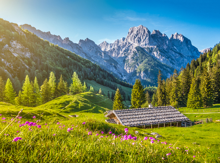 Idyllic landscape in the Alps with traditional mountain chalet and fresh green mountain pastures with blooming flowers at sunset, Nationalpark Berchtesgadener Land, Bavaria, Germany Stok Fotoğraf