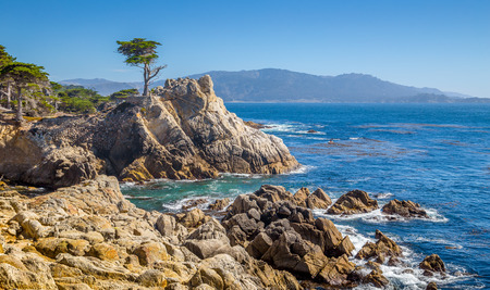 Classic postcard view of famous Lone Cypress, a landmark on a granite hillside off Californias scenic 17-mile drive in Pebble Beach gated community on a beautiful sunny day with blue sky, USA