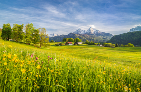Beautiful view of idyllic alpine mountain scenery with blooming meadows and snowcapped mountain peaks on a beautiful sunny day with blue sky in springtime Banque d'images