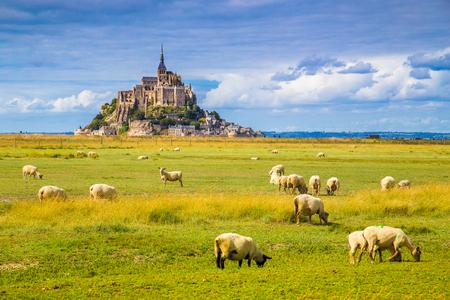 Piękny widok na słynną historyczną wyspę pływową Le Mont Saint-Michel z owcami pasącymi się na polach świeżej zielonej trawy w słoneczny dzień z błękitnym niebem i chmurami latem, Normandia, północna Francja