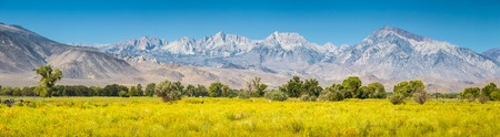 Panoramic view of Eastern Sierra Nevada mountain range with blooming meadows and trees on a beautiful sunny day with blue sky in summer seen from Bishop, Inyo County, California, USA Banco de Imagens