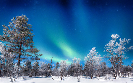 Panoramic view of amazing Aurora Borealis northern lights over beautiful winter wonderland scenery with trees and snow on a scenic cold night in Scandinavia, northern Europe