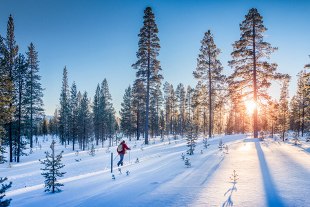Panoramic view of man cross-country skiing on a track in beautiful winter wonderland scenery in Scandinavia with scenic evening light at sunset in winter, northern Europe