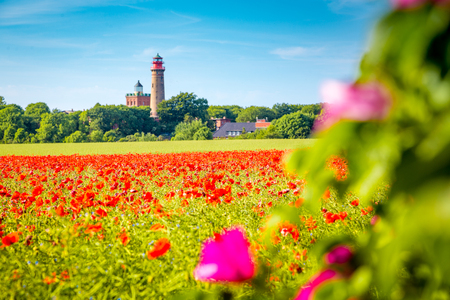 Beautiful view of Kap Arkona lighthouse with a field of blooming red poppy flowers in summer, island of Rügen, Ostsee, Germany 版權商用圖片