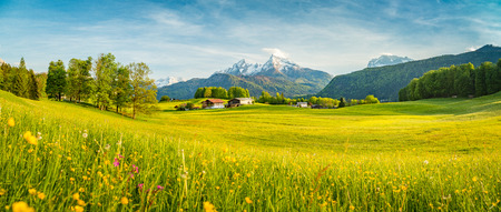 Beautiful view of idyllic alpine mountain scenery with blooming meadows and snowcapped mountain peaks on a beautiful sunny day with blue sky in springtime Foto de archivo