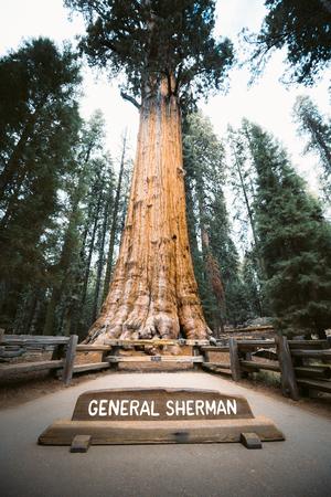Malerischer Blick auf den berühmten General Sherman Tree, den größten bekannten lebenden einstämmigen Baum der Welt, Sequoia National Park, Kalifornien, USA