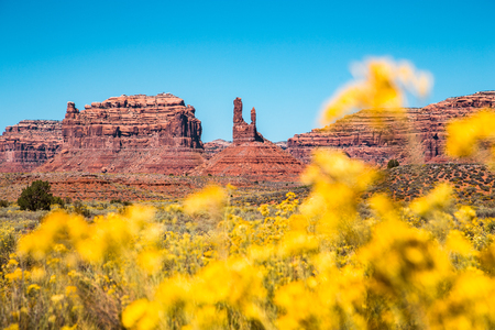 Scenic view of famous Valley of the Gods with blooming wildflowers on a beautiful sunny day with blue sky in summer, Utah, USA