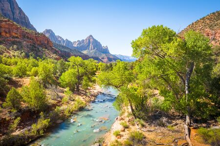 Zion National Park scenery with famous Virgin river and The Watchman mountain peak in the background on a beautiful sunny day with blue sky in summer, Utah, USA Imagens