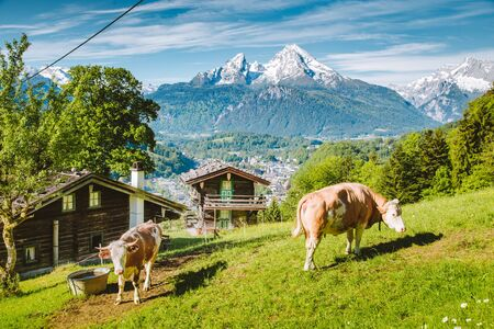 Beautiful panoramic view of idyllic alpine scenery with traditional mountain chalets and cow grazing on green meadows on a beautiful sunny day with blue sky and clouds in springtime