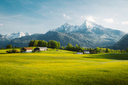 Beautiful view of idyllic alpine mountain scenery with blooming meadows and snowcapped mountain peaks on a beautiful sunny day with blue sky in springtime 版權商用圖片