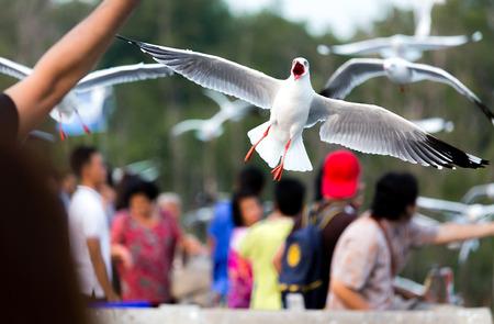 agape: Seagull agape expand the wings Stock Photo