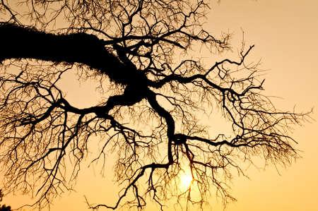 toter baum: Tod von einem Baum in den Sonnenuntergang