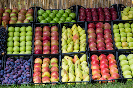 Apples, pears and plums in plastick baskets Stock Photo