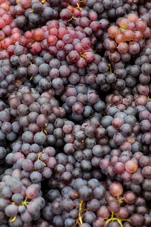 Vivid photo of puple grapes Stock Photo