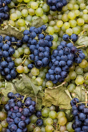 Vivid photo of blue and white grapes