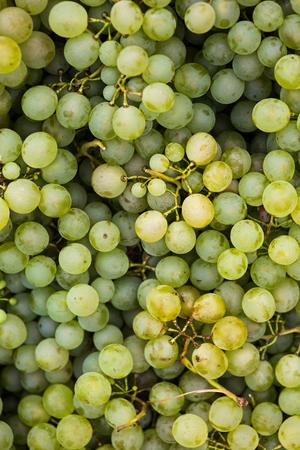 Vivid photo of white grapes
