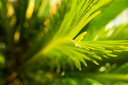 Close up of a green palmtree leaf Stock Photo