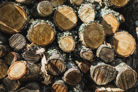 Details of wood piled