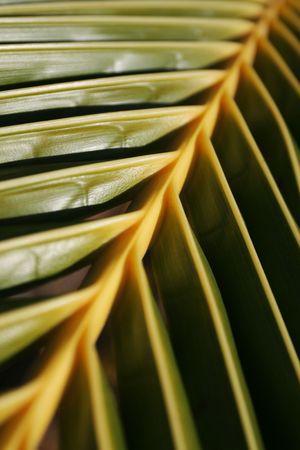 palmy: Palm leaf background
