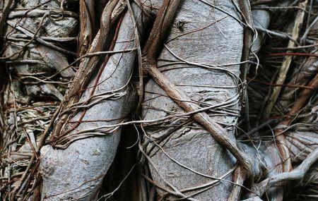 face in tree bark: Distort tree trunk surface