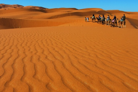 Group of people on camels in the Sahara desert, Morocco photo