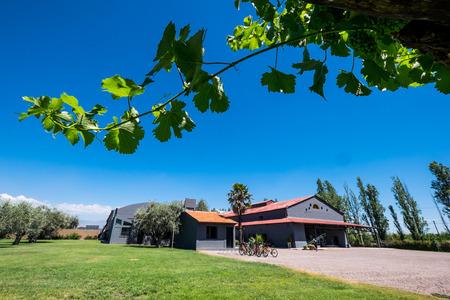 Wineyard in Mendoza, Argentina Stock Photo