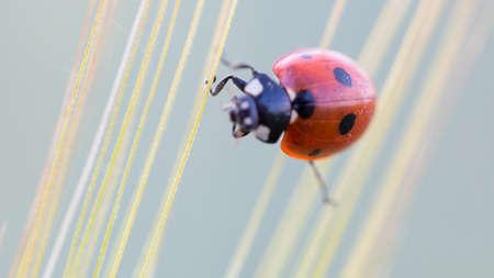 Ladybug Macro Insect Archivio Fotografico