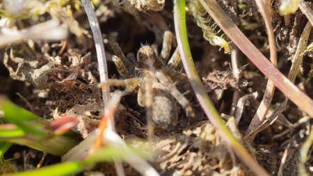 spider, menacing, macro, beautiful, insect Stock Photo