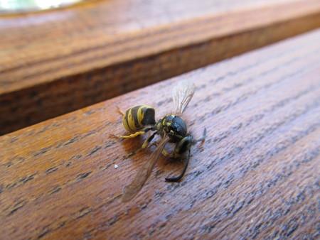 wasp: Avispa Dead