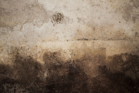 black mold: Wall texture with black mold on the bottom