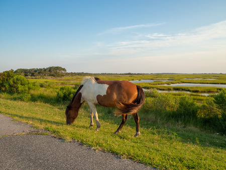 Assateague State Park, Wild horses Island in Maryland, marches and beach