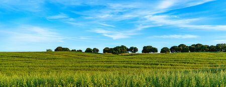 panoramic landscape of fields with green grass, threes and clouds Standard-Bild