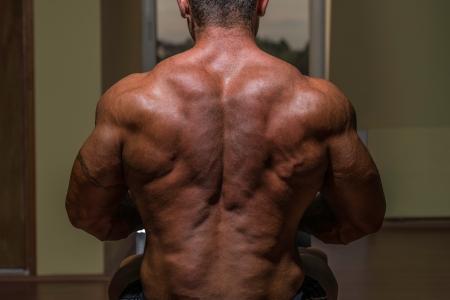 body builder: male bodybuilder flexing his back