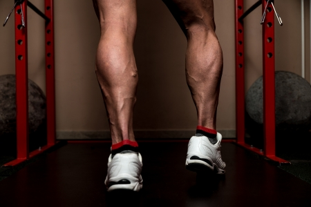 leg muscle fiber: Look At  My Calves