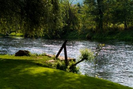 bosna: Foresta del fiume Bosna