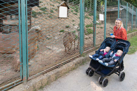 Happy Young Mother With Babies in Buggy Walking in Zoo Park Banque d'images