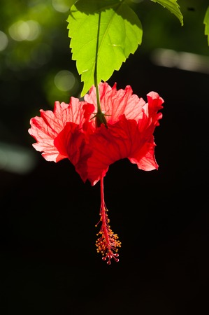colorize: Beautiful red tropical flower somewere in jungle