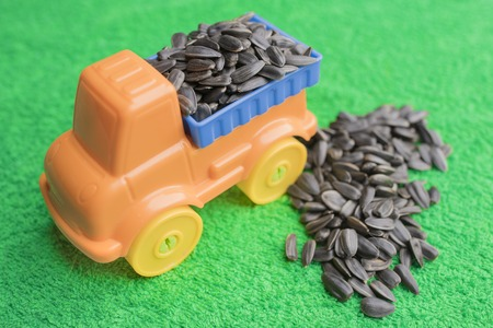 Black sunflower seeds lie in the back of a bright childrens toy car and lie side by side on an emerald green background.