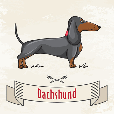 Dachshund Hunting Cute Dog  Vector Cartoon Illustrartion  Vector