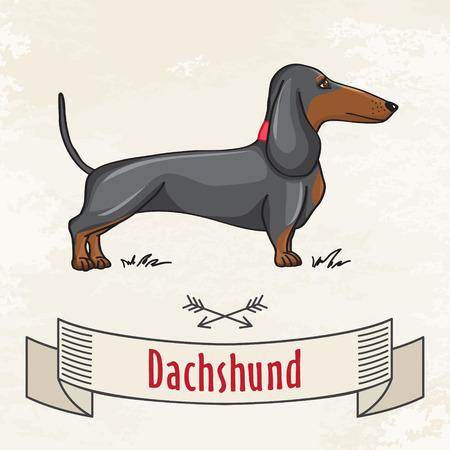 sausage dog: Dachshund Hunting Cute Dog  Vector Cartoon Illustrartion
