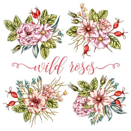 wild rose: vintage graphic collection of wild rose bouquets. Decorative floral isolated elements. flowers posy set for invitation, greeting, Save the Date, birthday card. Illustration