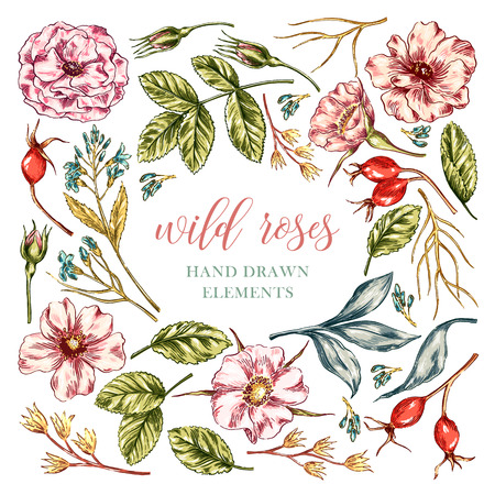 colorful wild rose floral elements collection with leaves and flowers. Decorative floral set for fabric, textile, wrapping paper, card, invitation, wallpaper, web design. Ilustracja